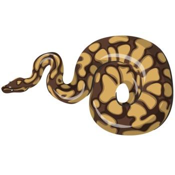 boa แปลว่า งูเหลือม