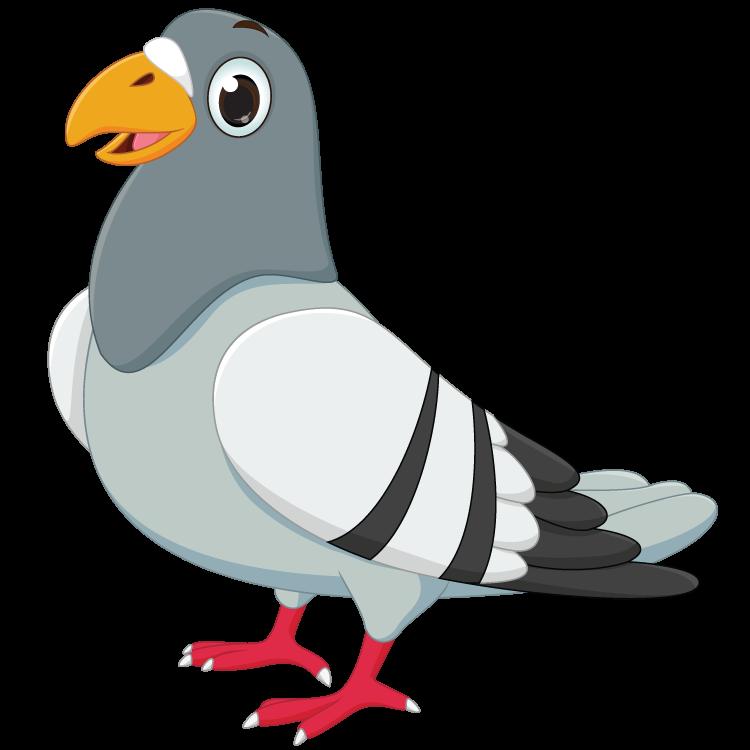 coo แปลว่า เสียงร้องของนกพิราบหรือนกเขา