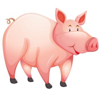 hog แปลว่า หมู