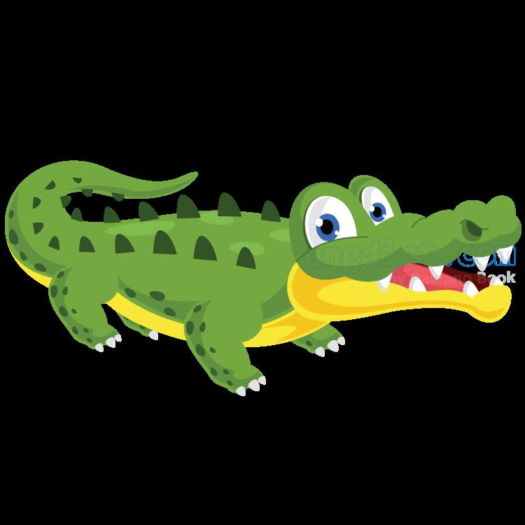 alligator แปลว่า จระเข้