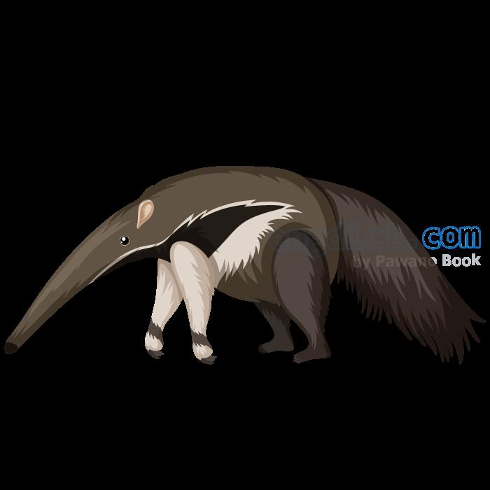 anteater แปลว่า ตัวกินมด