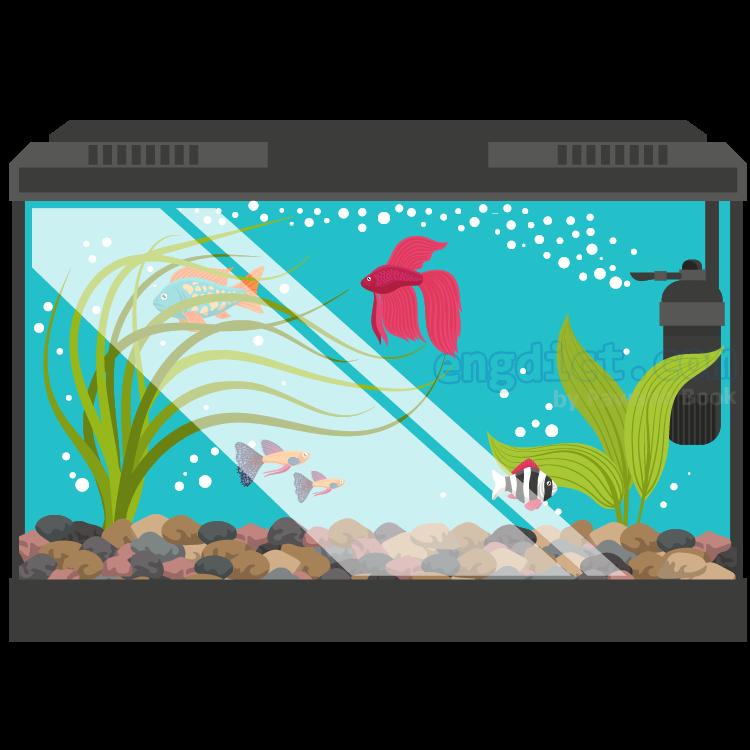 aquarium แปลว่า ตู้ปลา