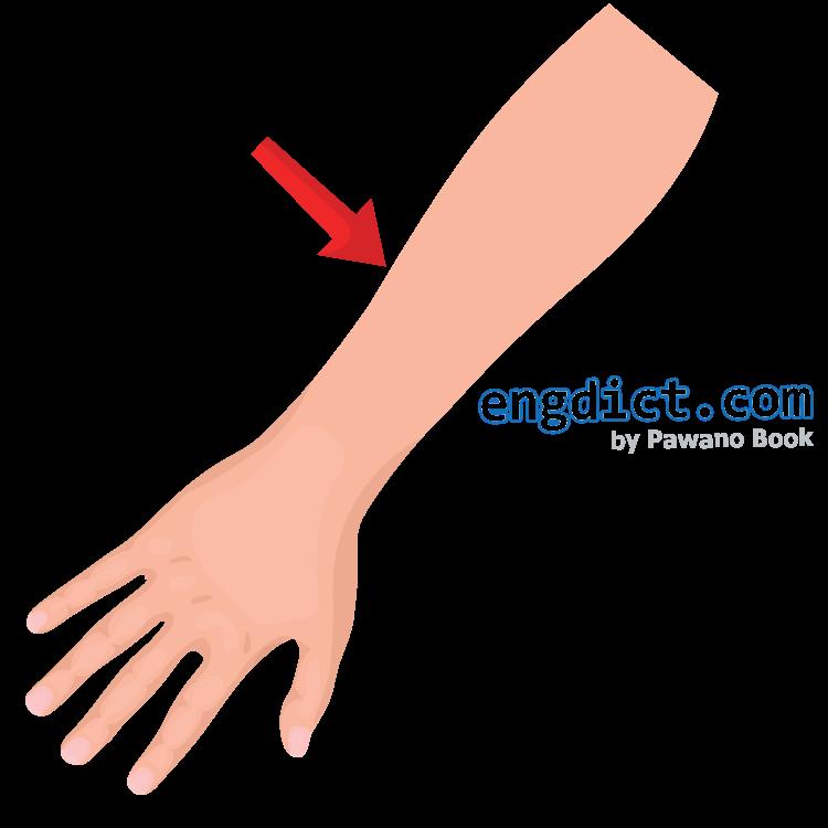 arm แปลว่า แขน