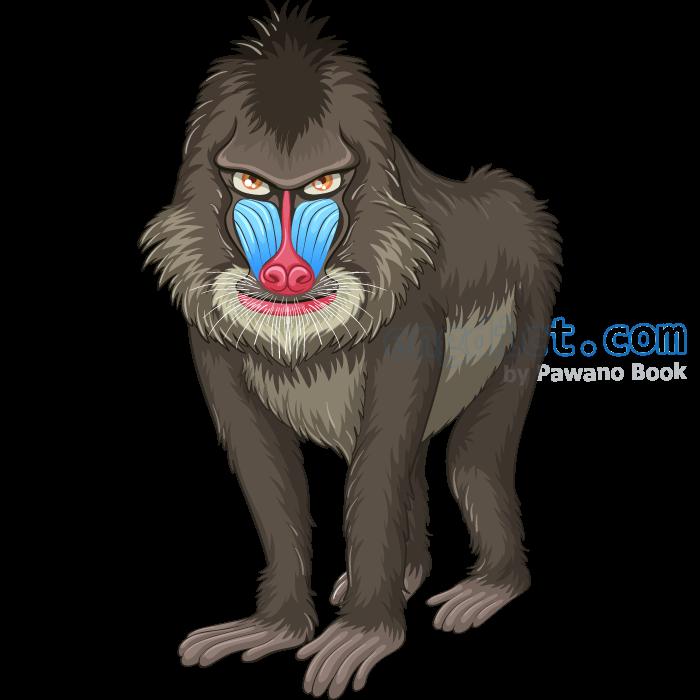 baboon แปลว่า ลิงบาบูน