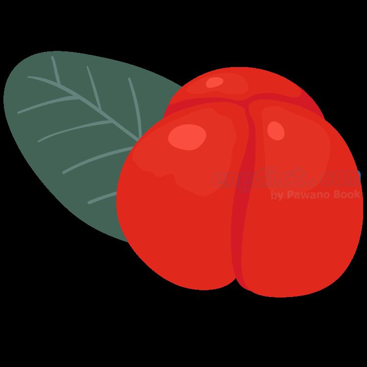 barbados cherry แปลว่า บาเบโดซ เชอร์รี