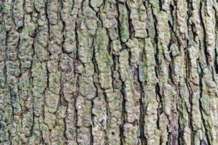 bark แปลว่า เปลือกไม้