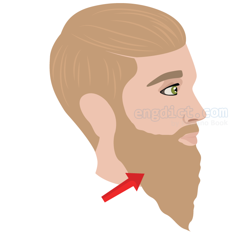 beard แปลว่า เครา