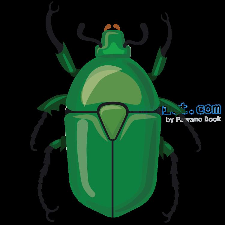 beetle แปลว่า แมลงปีกแข็ง