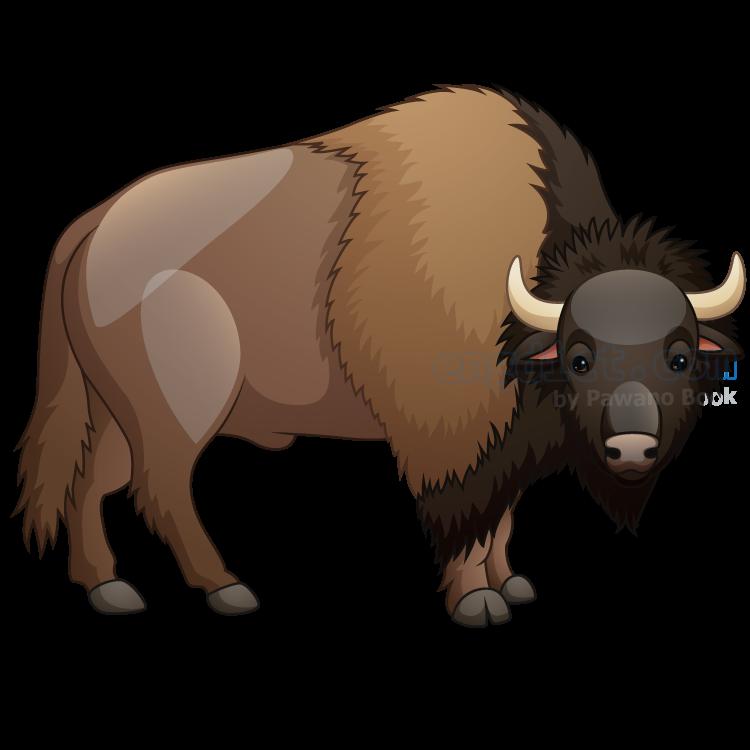 bison แปลว่า กระทิง