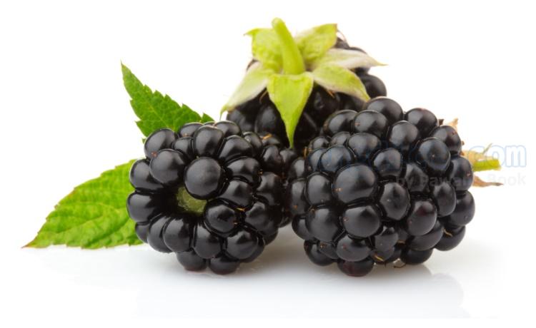 blackberry แปลว่า ผลแบล็กเบอร์รี่