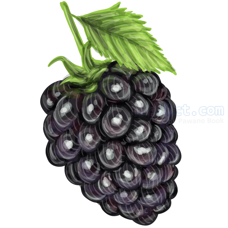 blackberry แปลว่า แบล็คเบอร์รี่