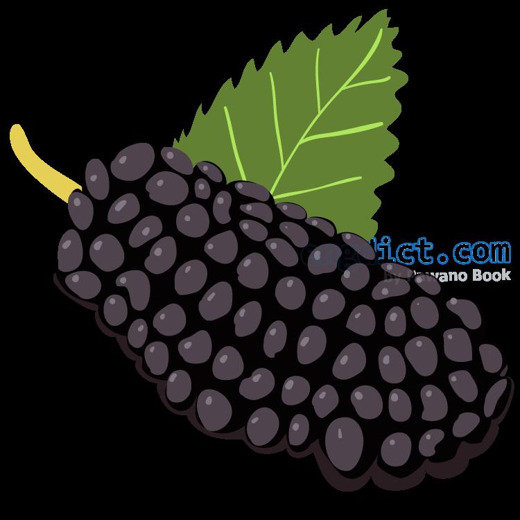 black mulberry แปลว่า แบล็คมัลเบอร์รี่