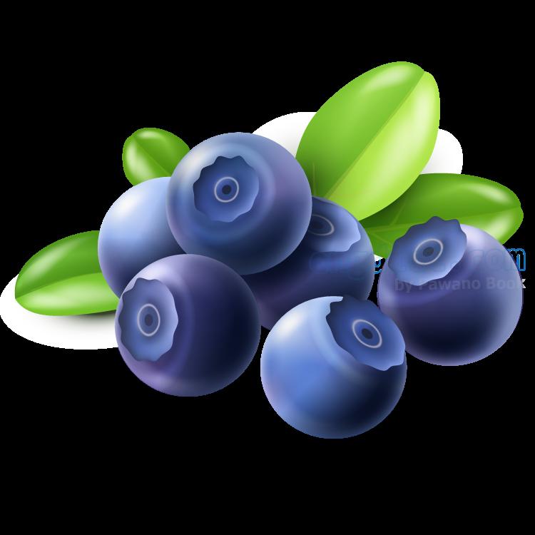 blueberry แปลว่า บลูเบอร์รี่