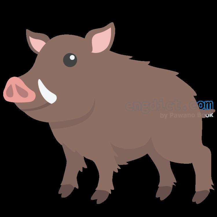 boar แปลว่า หมูป่าตัวผู้