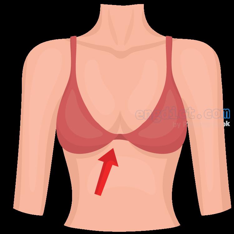 breast แปลว่า หน้าอก