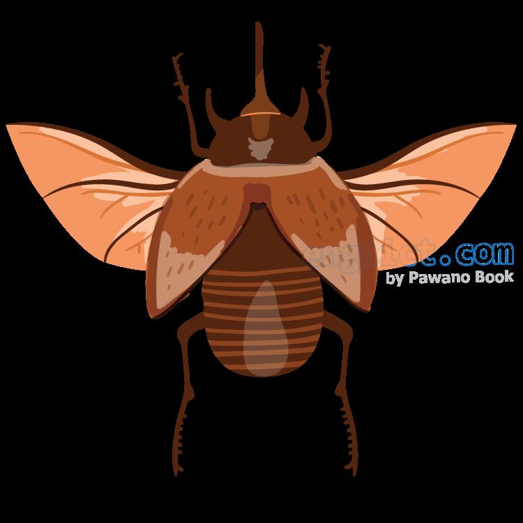bug แปลว่า แมลง