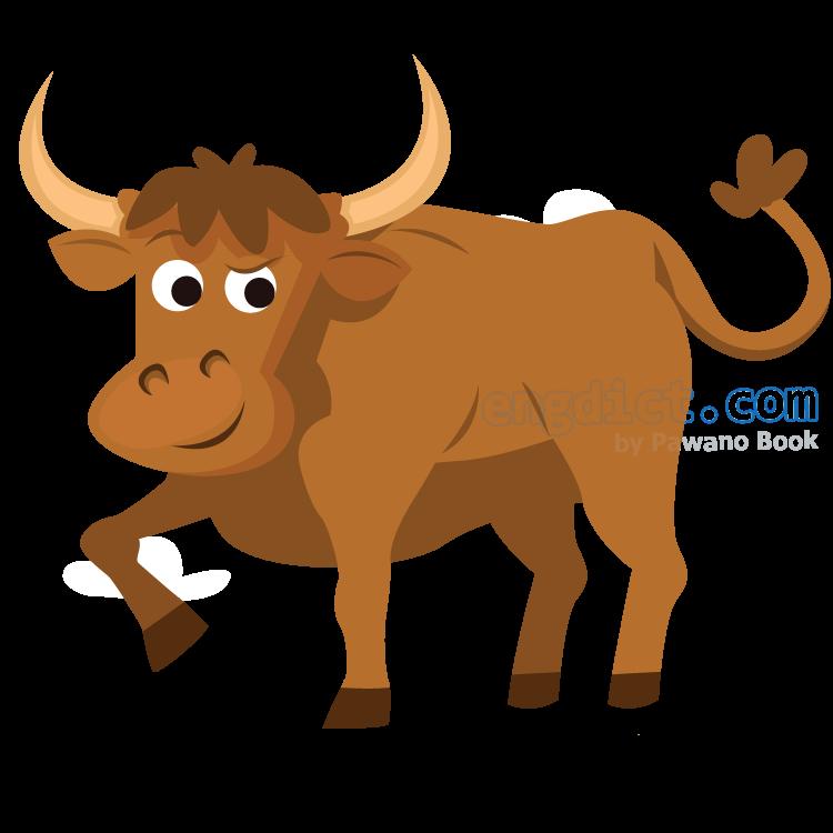 bullock แปลว่า วัวหนุ่ม
