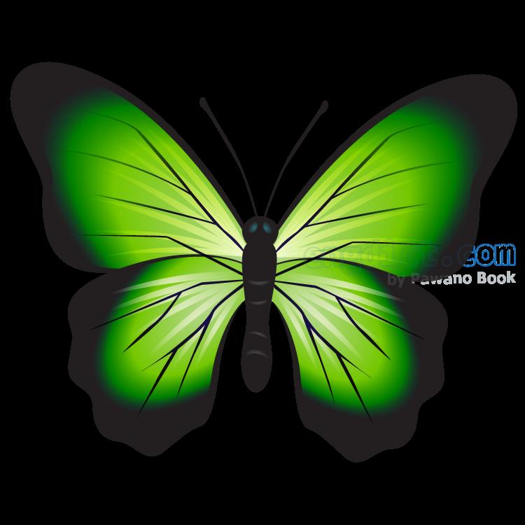 butterfly แปลว่า ผีเสื้อ
