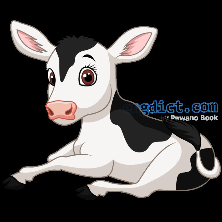 calf แปลว่า ลูกวัว