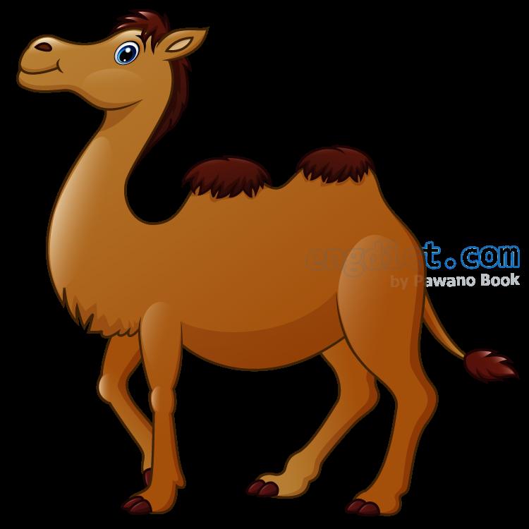 camel แปลว่า อูฐ