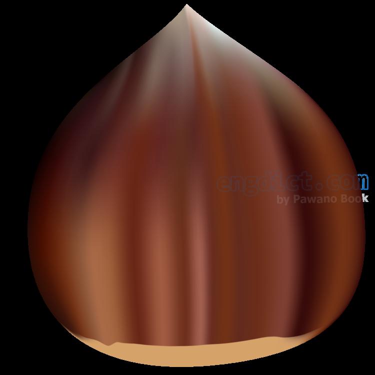 chestnut แปลว่า เกาลัด