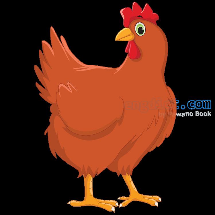 chicken แปลว่า ไก่