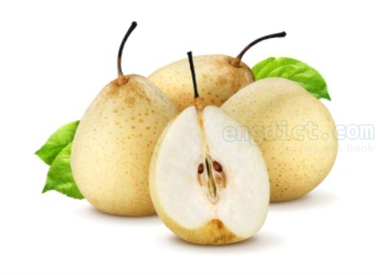 chinese pear แปลว่า สาลี่