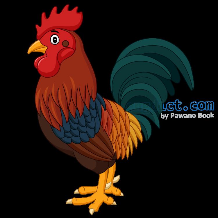 cock แปลว่า ไก่ตัวผู้