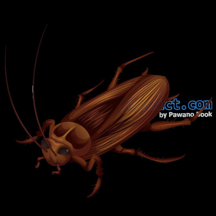 cockroach แปลว่า แมลงสาบ