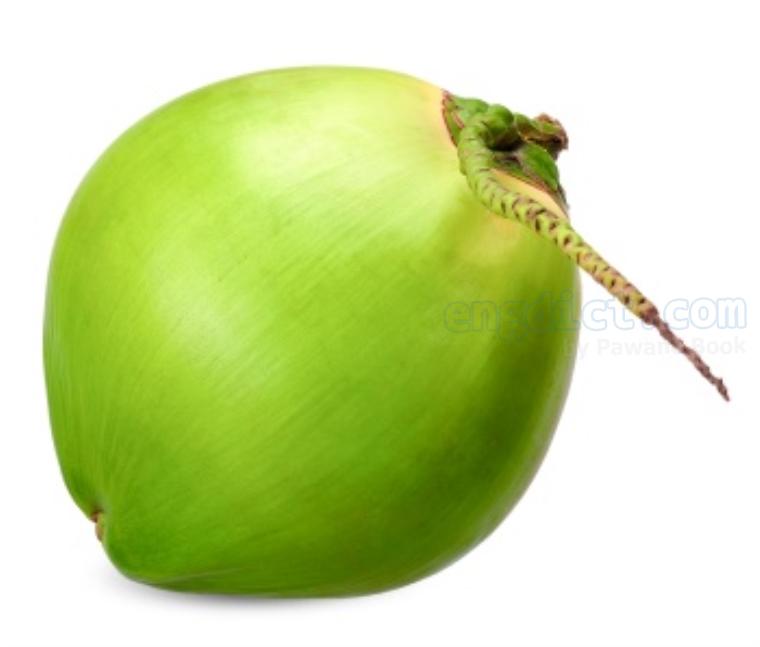 coconut แปลว่า มะพร้าว