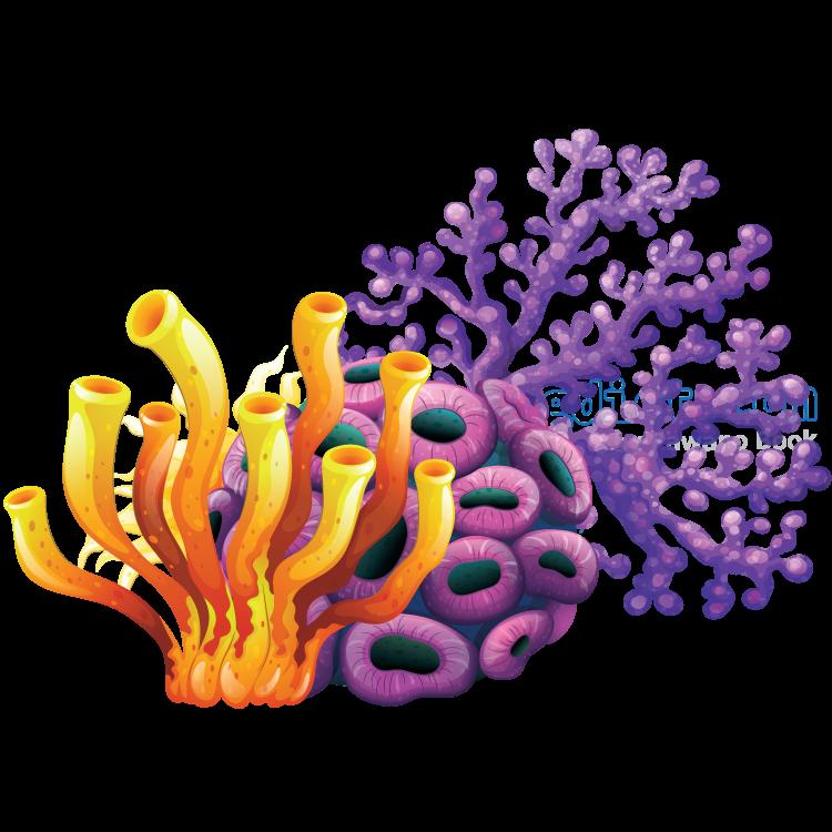 coral reef แปลว่า แนวปะการัง