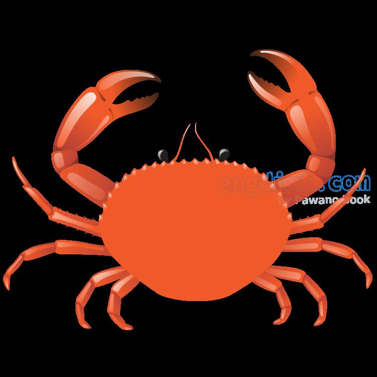 crab แปลว่า ปู