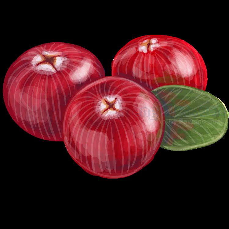 cranberry แปลว่า แครนเบอร์รี่