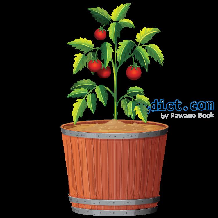 crop แปลว่า พืชผล