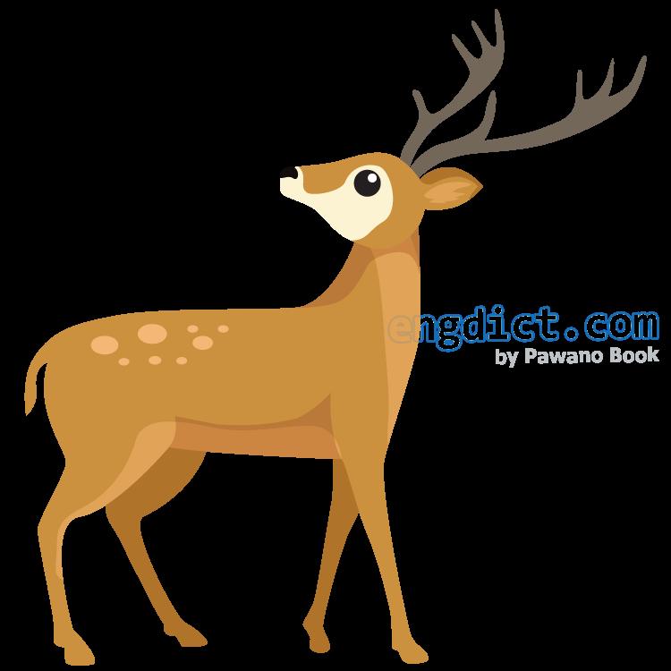 deer แปลว่า กวาง