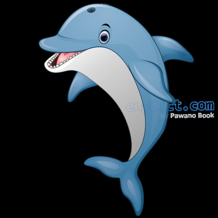 dolphin แปลว่า ปลาโลมา