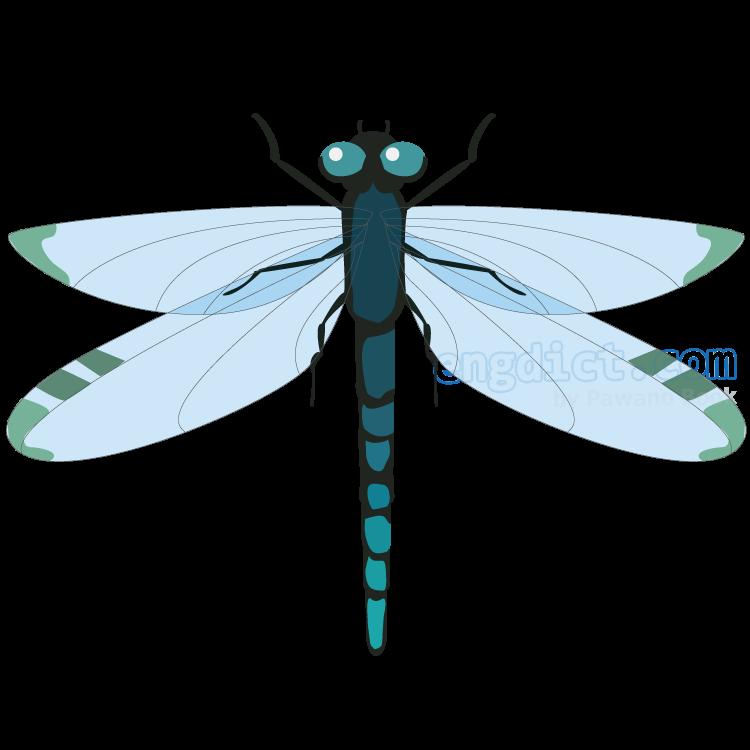 dragonfly แปลว่า แมลงปอ