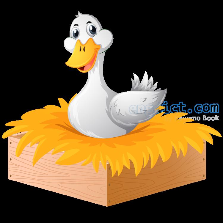 duck แปลว่า เป็ด