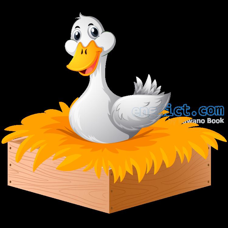 duck แปลว่า เป็ดตัวเมีย