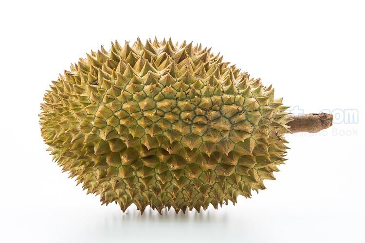durian แปลว่า ทุเรียน