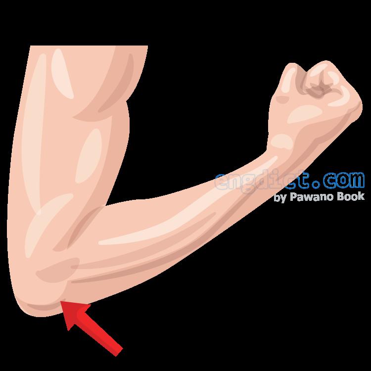 elbow แปลว่า ข้อศอก