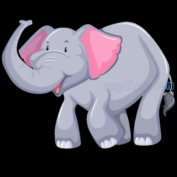 elephant แปลว่า ช้าง