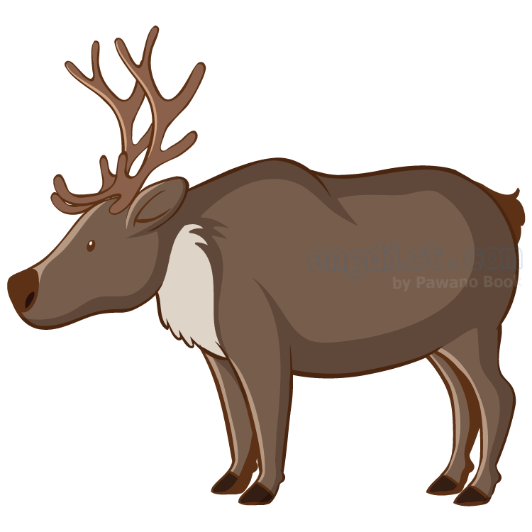 elk แปลว่า กวางใหญ่ชนิดหนึ่ง