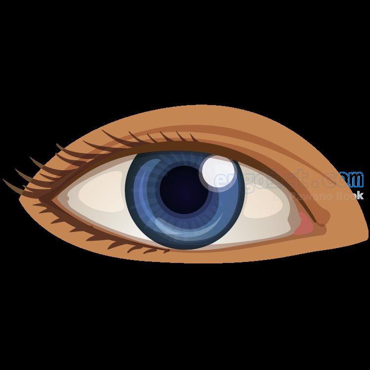 eye แปลว่า ดวงตา