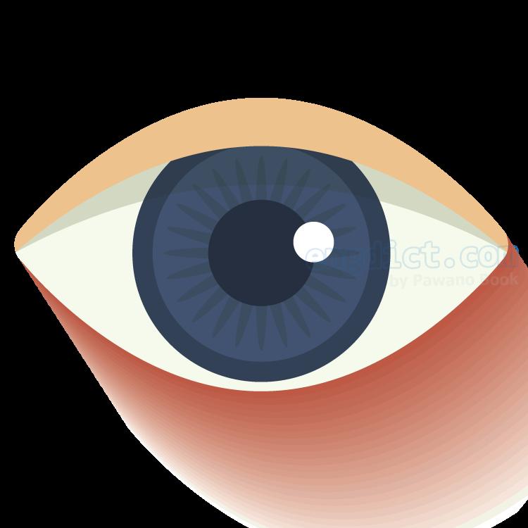 eye แปลว่า ตา