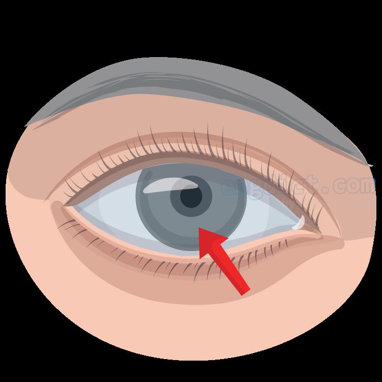 eyeball แปลว่า ลูกตา