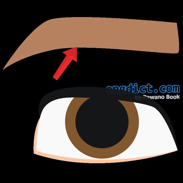 eyebrow แปลว่า คิ้ว