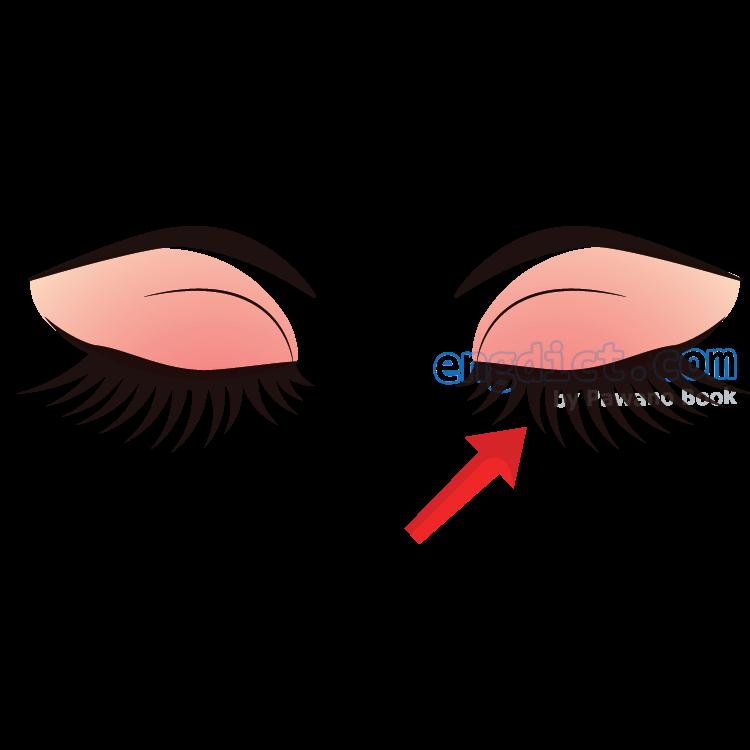 eyelash แปลว่า ขนตา