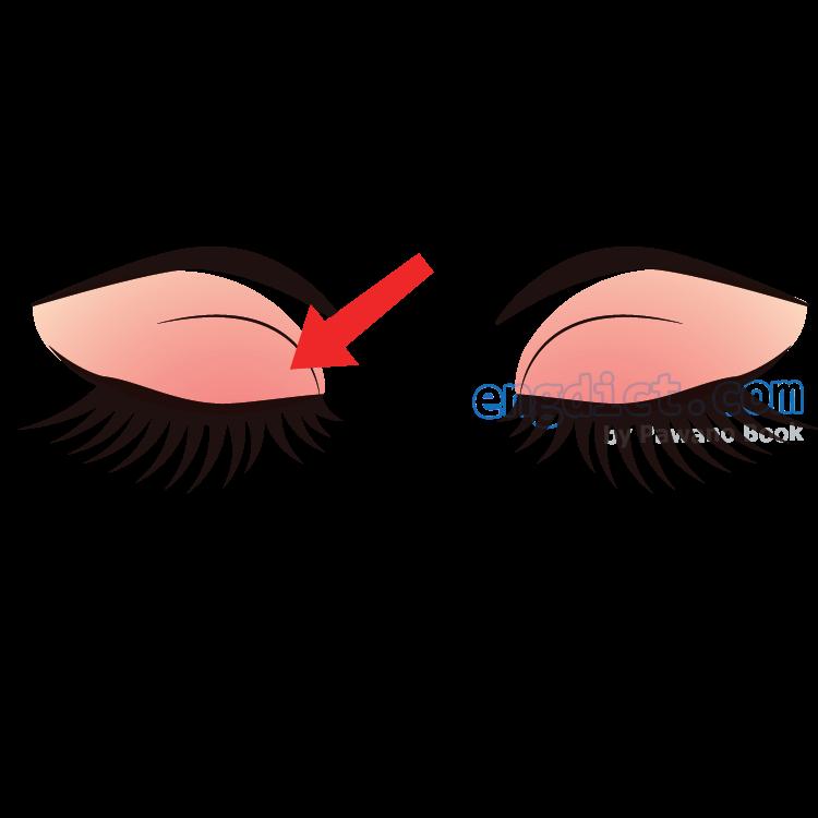 eyelid แปลว่า เปลือกตา