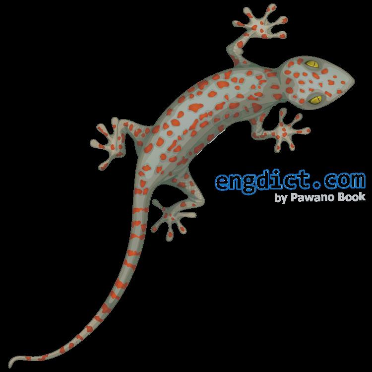 gecko แปลว่า ตุ๊กแก